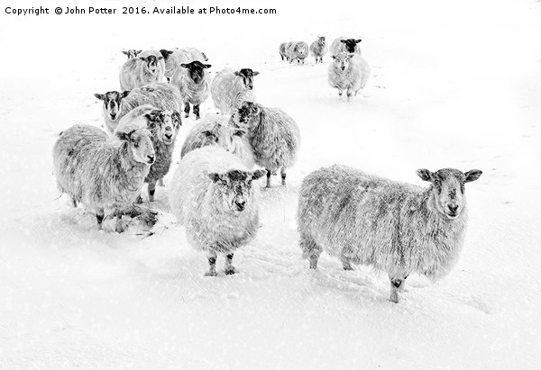 Blizzard in Wharfedale Canvas print by John Potter