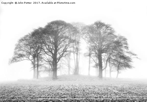 Beech Trees in Mist Canvas print by John Potter
