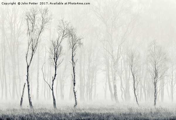 Silver Birch Tapestry Canvas print by John Potter