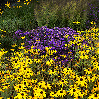 Buy canvas prints of Summer Flowers by Kevin White