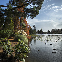 Buy canvas prints of Sheffield Park by Kevin White