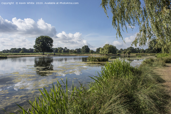 Summer scene at Bushy Park Framed Mounted Print by Kevin White