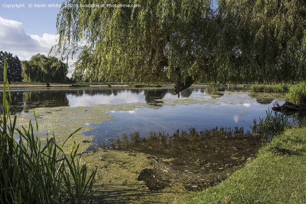 Ponds at Bushy Park Framed Mounted Print by Kevin White
