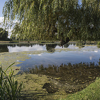 Buy canvas prints of Ponds at Bushy Park by Kevin White