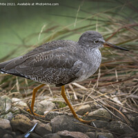 Buy canvas prints of The Ruff by Kevin White