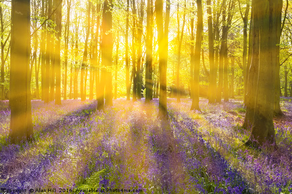 Sunshine streams through bluebell woods Canvas print by Alan Hill