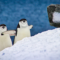 Buy canvas prints of Happy Feet by James Kenning