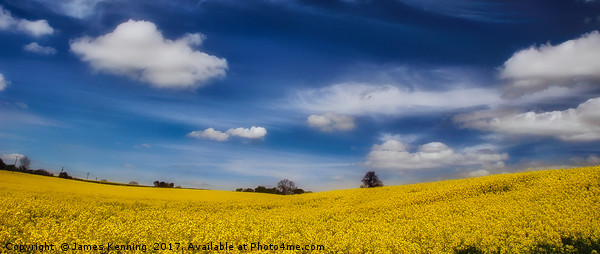Blue and Gold Canvas Print by James Kenning