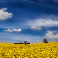 Buy canvas prints of Blue and Gold by James Kenning