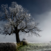 Buy canvas prints of Frosty the Treeman by James Kenning