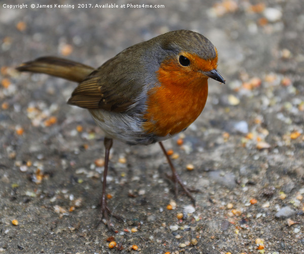 Robin Redbreast Canvas Print by James Kenning