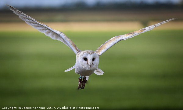 Flight of the Barn Owl Canvas print by James Kenning