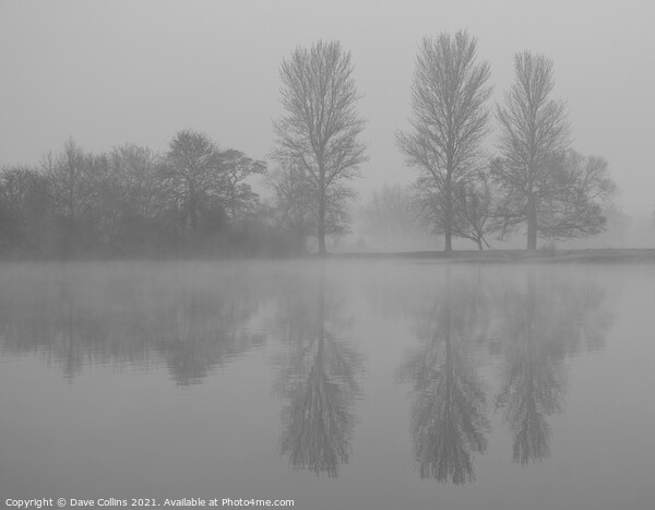 Tree Reflections, Misty Morning Framed Print by Dave Collins