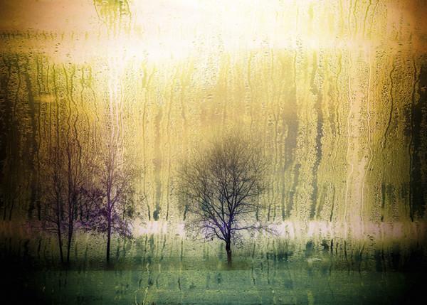 Dark forest  Canvas print by Larisa Siverina