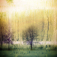 Buy canvas prints of Dark forest  by Larisa Siverina