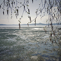 Buy canvas prints of Spring landscape with ice drift on the lake.   by Larisa Siverina