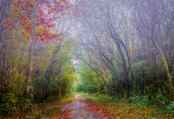 Autumn Mist in Slebech Wood in Pembrokeshire. Canvas print by Colin Allen