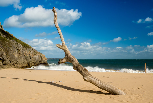 Barafundle Bay - Driftwood on the Shore. Canvas print by Colin Allen