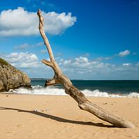Buy canvas prints of Barafundle Bay - Driftwood on the Shore. by Colin Allen