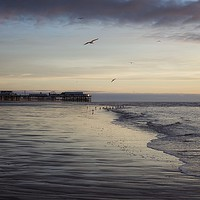 Buy canvas prints of Seagulls feeding as sunset by Phil Clayton