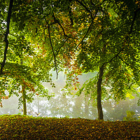 Buy canvas prints of riverside trees by mike morley