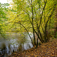 Buy canvas prints of River Nidd at Knaresborough North Yorkshire by mike morley