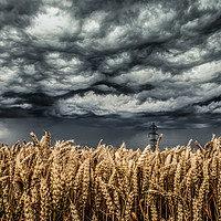 Buy canvas prints of Wheat Field Thunder Storm by Steve Lansdell