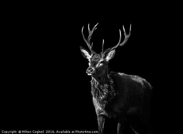 Red Deer 1 - Black Series Framed Mounted Print by Milton Cogheil
