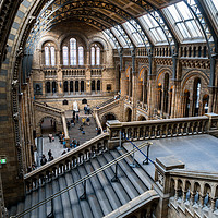 Buy canvas prints of Natural History Museum, London by Milton Cogheil