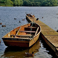 Buy canvas prints of Rowing Boat by Tom Curtis