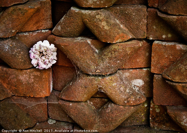 Flower Among the Bricks Canvas Print by Ann Mitchell