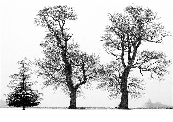 Three Trees silhouetted  againt a Snow Sky Canvas print by john hartley