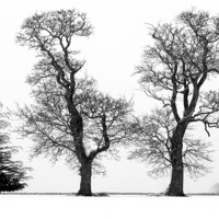 Buy canvas prints of Three Trees silhouetted  againt a Snow Sky by john hartley