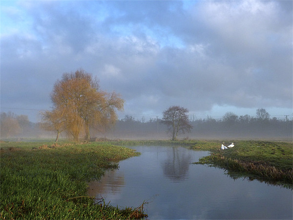 Swans in the early morning mist by the River Wensu Canvas Print by john hartley