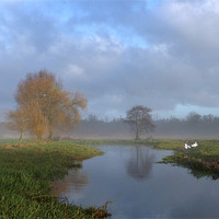 Buy canvas prints of Swans in the early morning mist by the River Wensu by john hartley