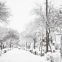 Buy canvas prints of Let it Snow 2 by Phil Wingfield