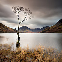 Buy canvas prints of Buttermere Lone Tree Dawn by Phil Buckle