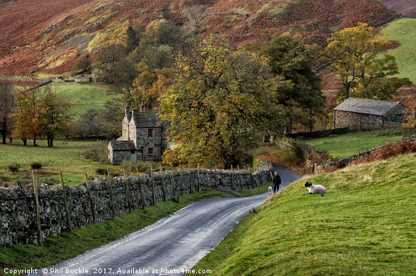 Autumn in Martindale Canvas print by Phil Buckle