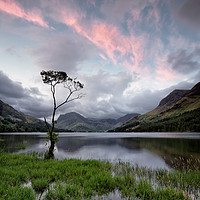 Buy canvas prints of Buttermere Lone Tree Sunrise by Phil Buckle