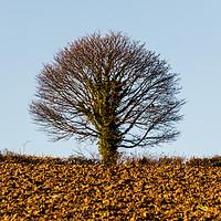 Buy canvas prints of Winter tree by David O'Brien