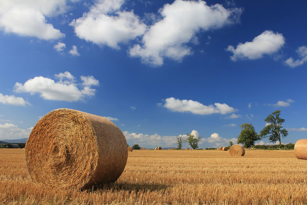 Straw bales in a stubble field Canvas Print by alan Barnes