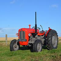 Buy canvas prints of 1962 Massey Ferguson MF 35 Tractor by alan Barnes