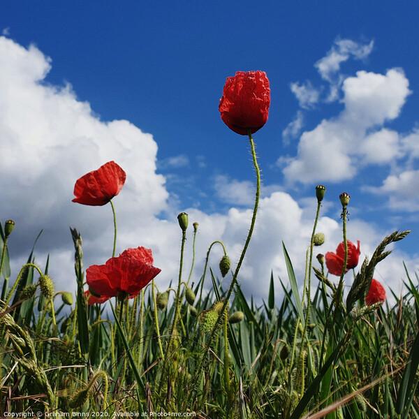 Poppy Field Blue Sky Canvas Print by Graham Binns