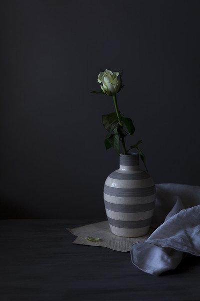 Single rose Canvas print by Denitsa Karan