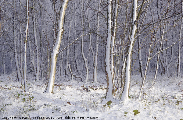 Early Snow in Woods Near Gittisham, Devon Canvas print by Paul Prestidge