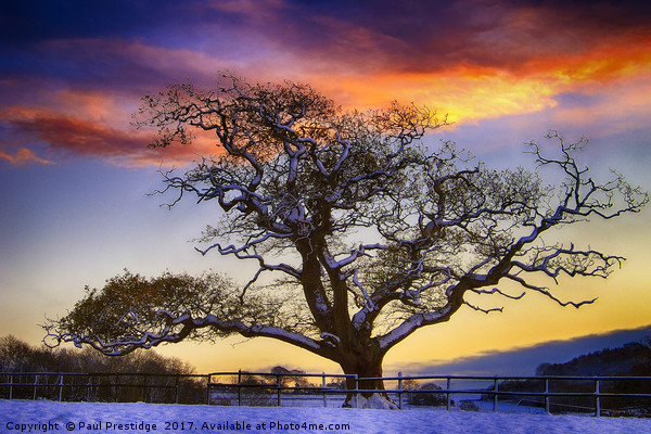 Snow covered Tree at Sunset Canvas print by Paul Prestidge