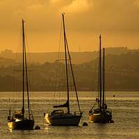 Buy canvas prints of Moored Yachts at Sunset by Paul Prestidge