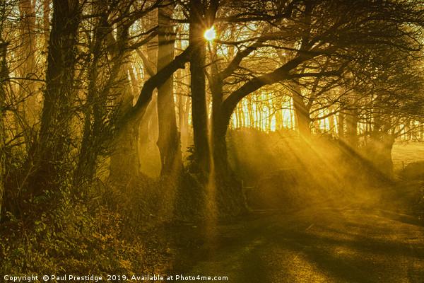 Sunlight Through the Trees Canvas Print by Paul Prestidge