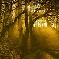 Buy canvas prints of Sunlight Through the Trees by Paul Prestidge