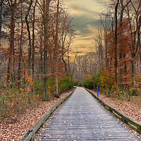 Buy canvas prints of Autumn on the Greenway by Darryl Brooks